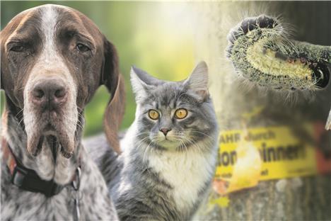 Haustiere Für Singles