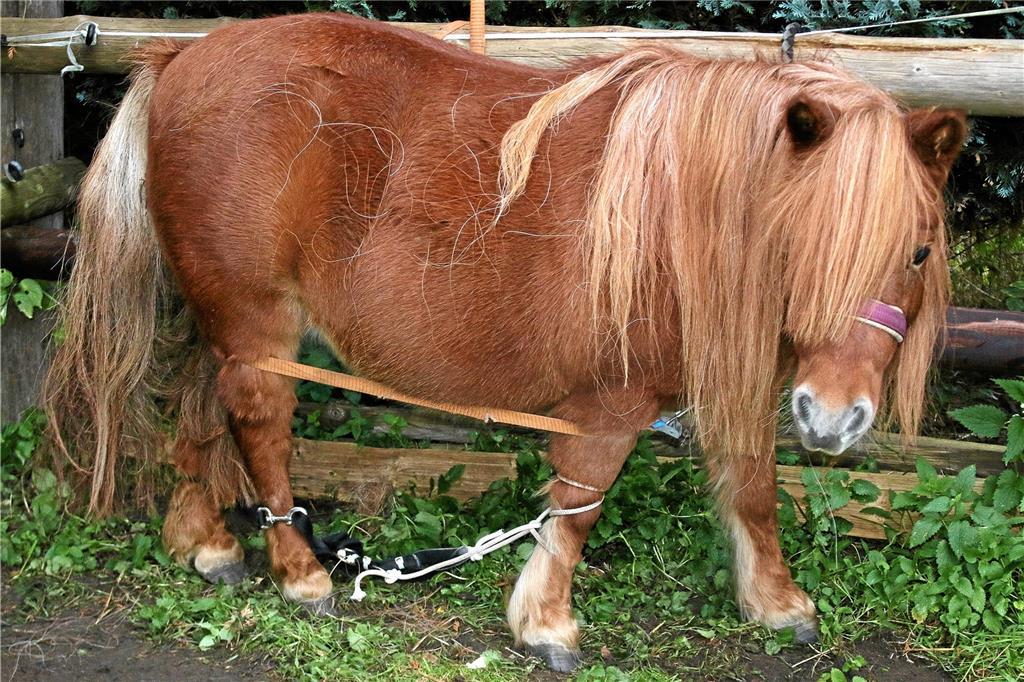 Pony Zu Verschenken